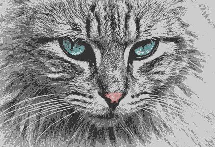 blu-eyed-cat