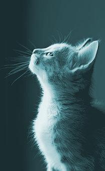 cat gazing