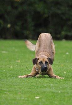 crouchingbigdog