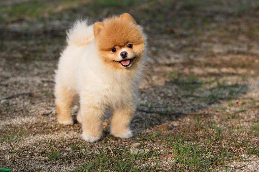 dog-fuzzyPup