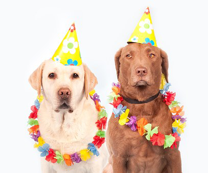 dogs-atBdayParty