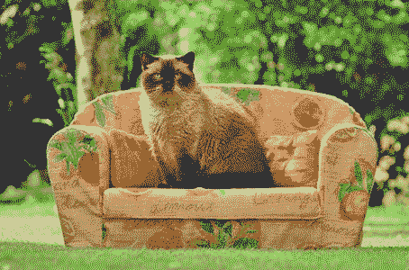 cat-on-couch
