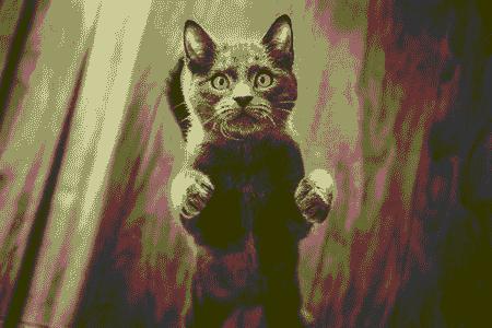 cat-sitting-up