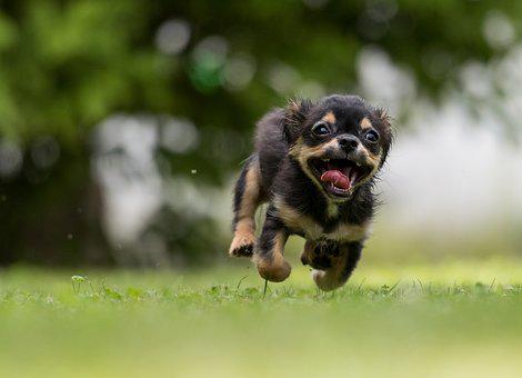 crazy pup