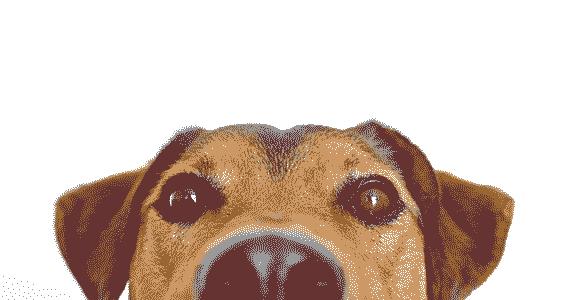 dogpeekingover