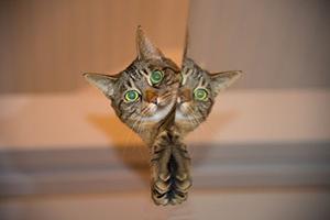 kittyReflection