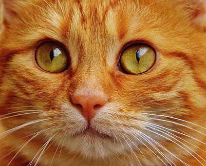 pretty kitty6
